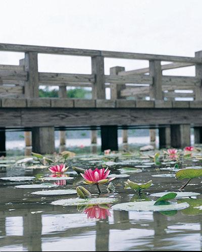 龍興寺沼公園2